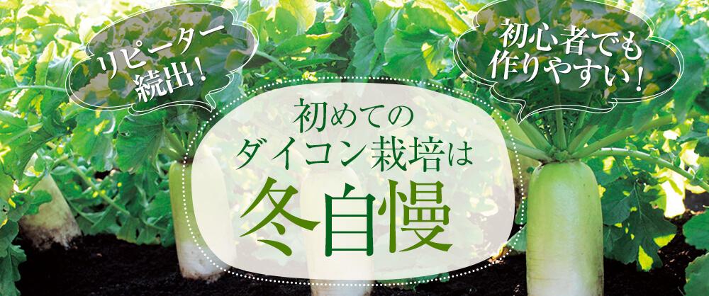 初めてのダイコン栽培は「冬自慢」